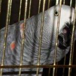 Клетка для попугая Жако
