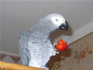 Зерновые и зеленые корма для попугаев Жако