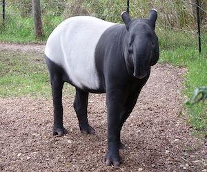 malajskij_tapir