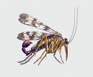 skorpionnicy