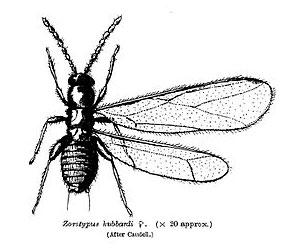 titanoptery