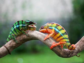 xameleony